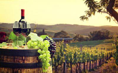Tipuri de vin si soiuri de struguri: care sunt cele mai bune vinuri